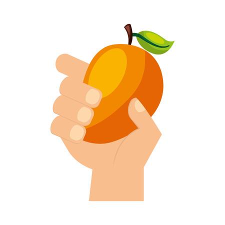 hand holding mango fresh food vector illustration Illustration
