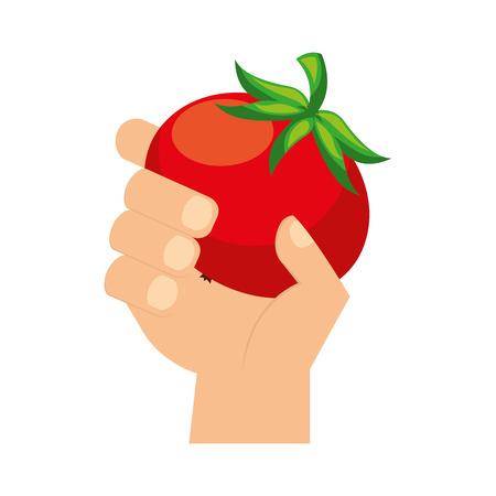 hand holding fresh tomato vegetable vector illustration