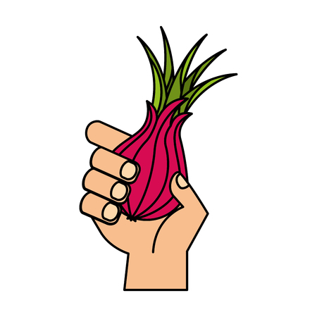 hand holding fresh onion vegetable vector illustration