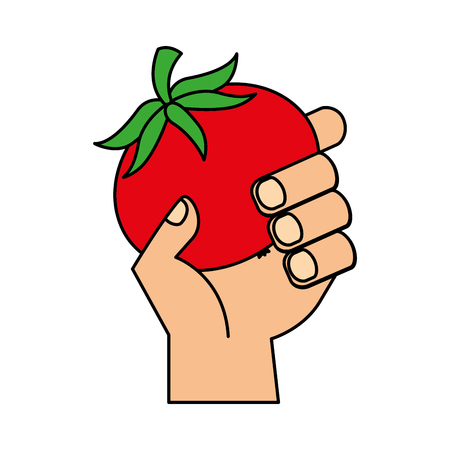 hand holding fresh tomato vegetable vector illustration