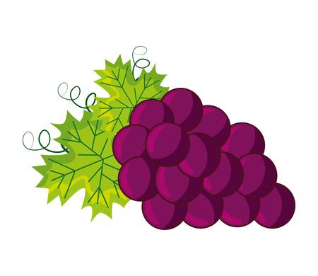 bunch fresh grapes on white background vector illustration Illustration