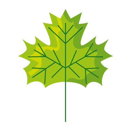 leaf nature foliage on white background vector illustration Иллюстрация