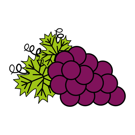 bunch fresh grapes on white background vector illustration Ilustração