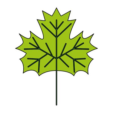 leaf nature foliage on white background vector illustration Ilustrace