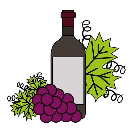 wine bottle bunch fresh grapes vector illustration Illustration