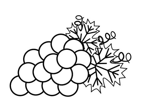 kiść świeżych winogron na białym tle ilustracji wektorowych