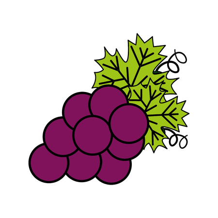 bunch fresh grapes on white background vector illustration 向量圖像