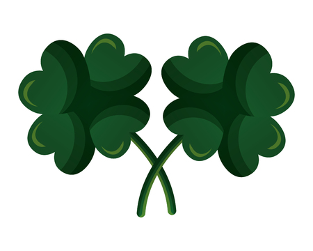 two clover four leaves on white background vector illustration