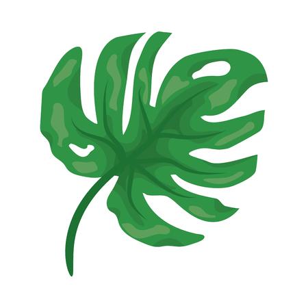 green leaf monstera on white background vector illustration