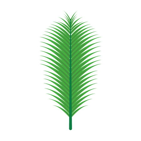 green palm leaf on white background vector illustration 向量圖像