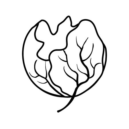 fresh lettuce vegetable icon vector illustration design Banco de Imagens - 116015358