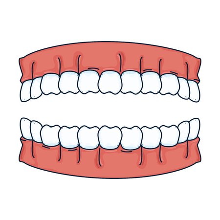 human teeth isolated icon vector illustration design