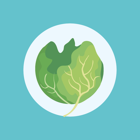 fresh cabbage vegetable icon vector illustration design Vettoriali