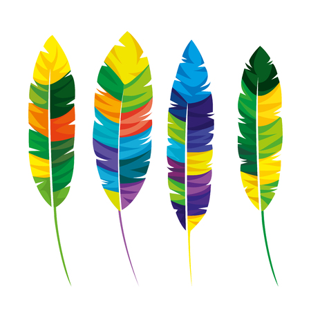 feathers exotic colors icon vector illustration design