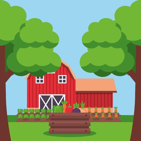 barn lettuce carrot planting vegetables farm fresh cartoon vector illustration Illustration