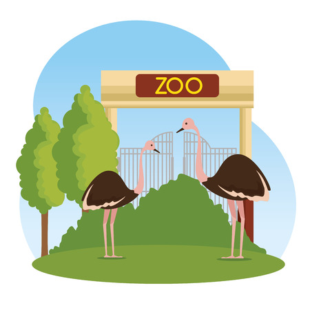 ostriches wild animals in the zoo reserve vector illustration