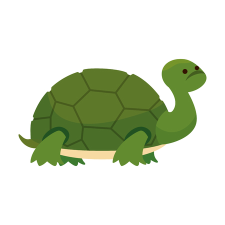 cute turtle wild character vector illustration design 向量圖像