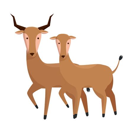 african antelopes couple wild characters vector illustration design Illusztráció