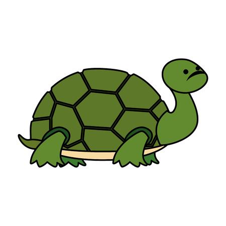 mignon, tortue, caractère sauvage, vecteur, illustration, conception