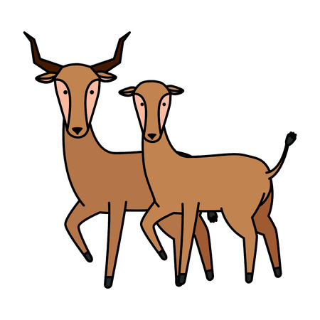 african antelopes couple wild characters vector illustration design Çizim