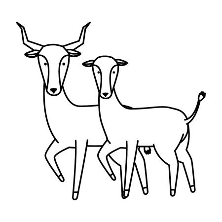 african antelopes couple wild characters vector illustration design Stock Illustratie