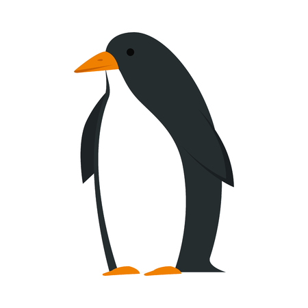 cute penguin bird character vector illustration design