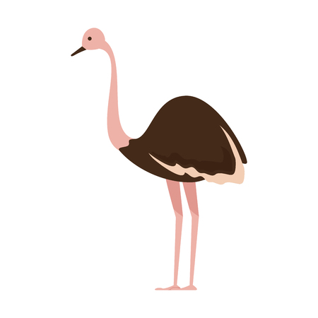wild ostrich bird character vector illustration design Çizim