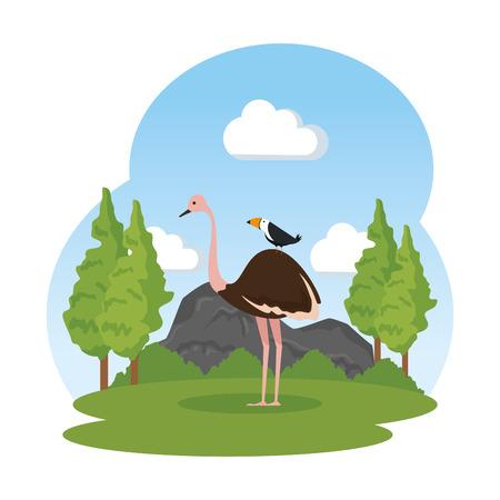 wild ostrich bird in the landscape vector illustration design