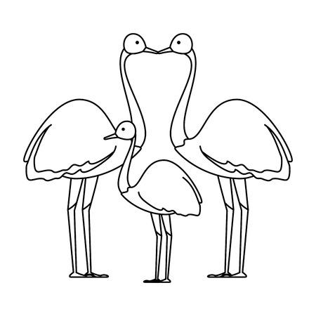 wild ostrich family birds vector illustration design