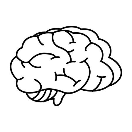 Órgano del cerebro humano en la ilustración de vector de fondo blanco Ilustración de vector
