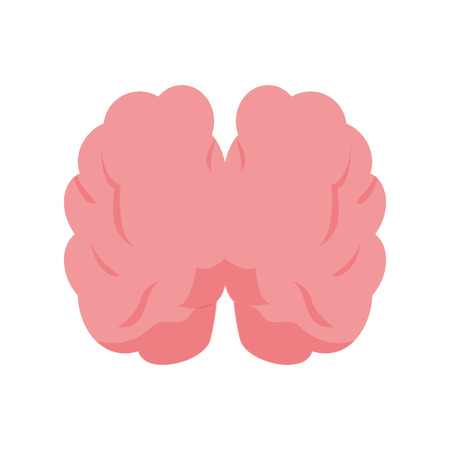top view human brain on white background vector illustration Stock Vector - 124715061