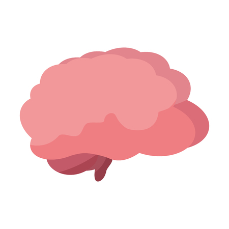 human brain organ on white background vector illustration Ilustracja
