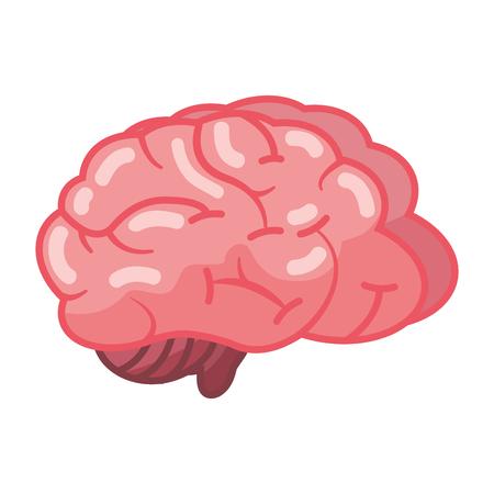 Órgano del cerebro humano en la ilustración de vector de fondo blanco