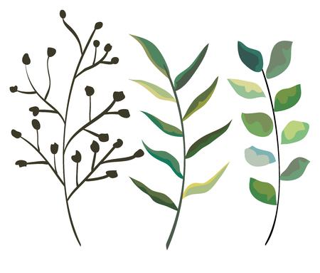 set natural branches leaves plants vector illustration Illustration