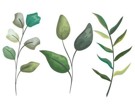 set natural branches leaves plants style vector illustration