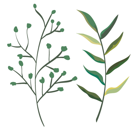 set exotic branches leaves plants style vector illustration Illustration