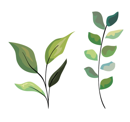 set exotic branches leaves plants design vector illustration Illustration