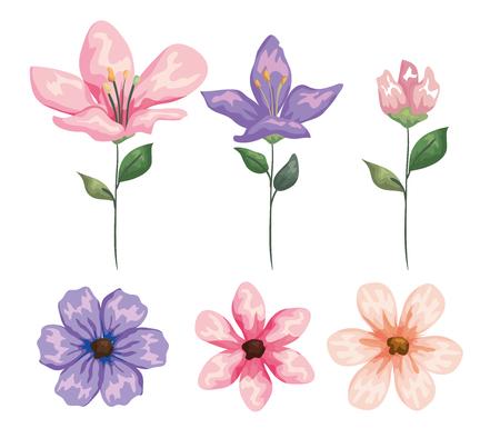 set exotic flowers plants with nature leaves vector illustration Çizim