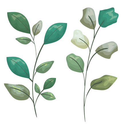 set exotic plants with leaves branches vector illustration