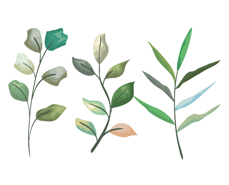 set exotic branches leaves plants vector illustration