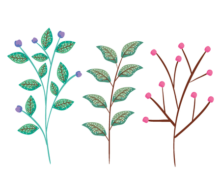set exotic leaves branches plants vector illustration