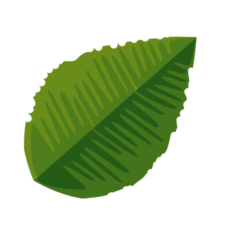ecology leaf plant icon vector illustration design