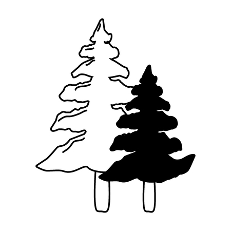 pine trees forest on white background vector illustration