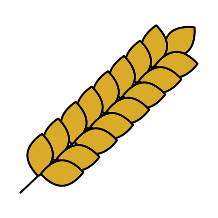 wheat spike nature icon vector illustration design