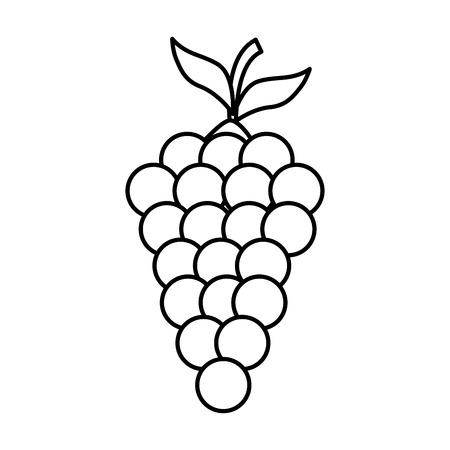 fresh grapes fruits icon vector illustration design Illustration