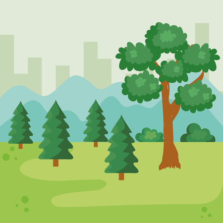 park with nature pines and tree with bushes vector illustration