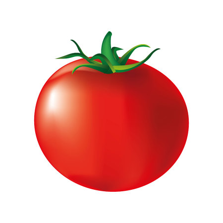 fresh tomato isolated icon vector illustration design