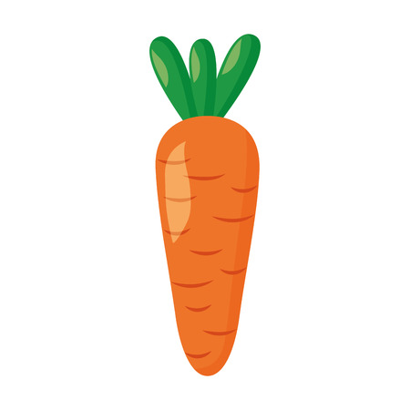 carrot vegetable fresh on white background vector illustration