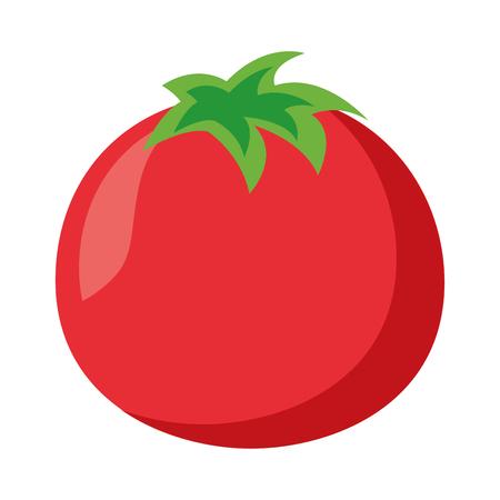 tomato vegetable fresh on white background vector illustration