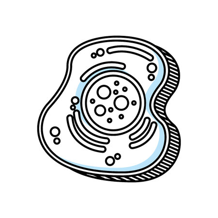Diseño de ilustración de vector de icono aislado de estructura celular